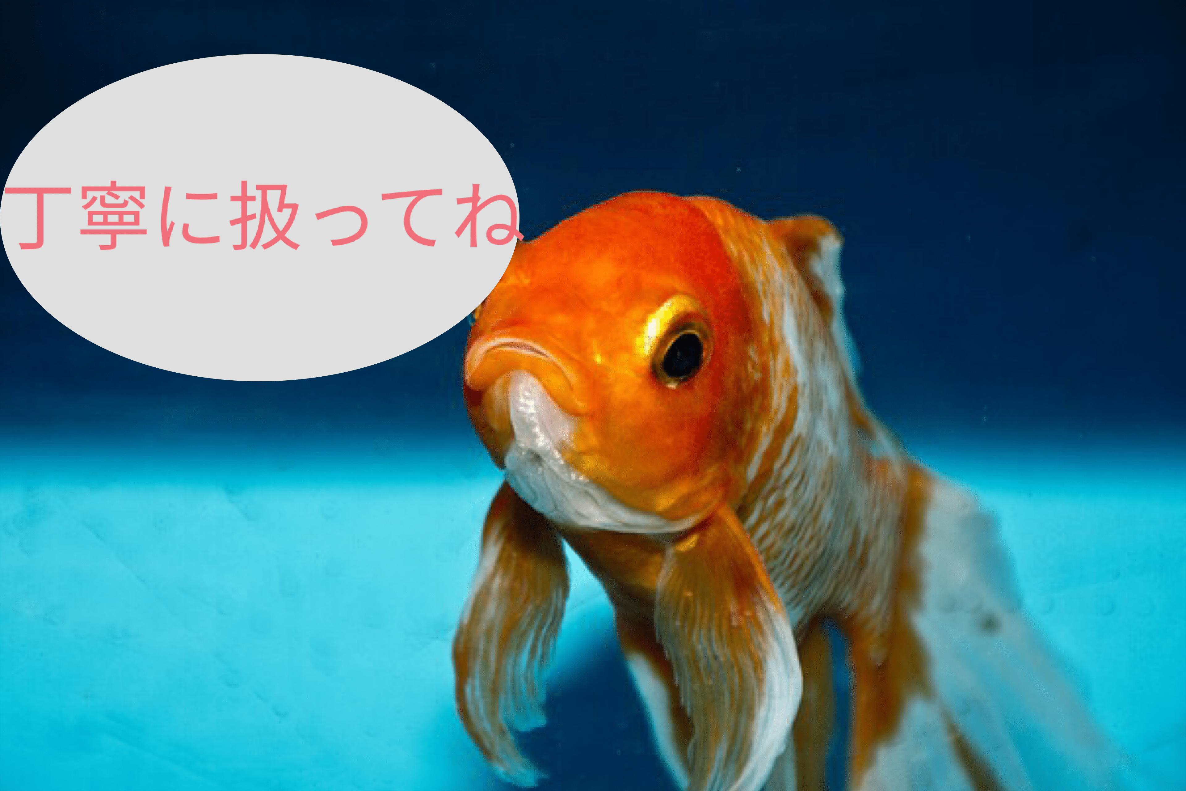 水槽の掃除をするとき、魚は入れたままでOK?魚目線で考えると