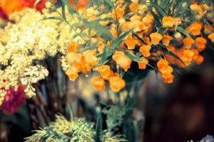 season - クリスマスベル(植物)とは!?毒性や育て方について