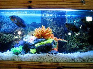 clean - 水槽の掃除をするとき、魚は入れたままでOK?魚目線で考えると